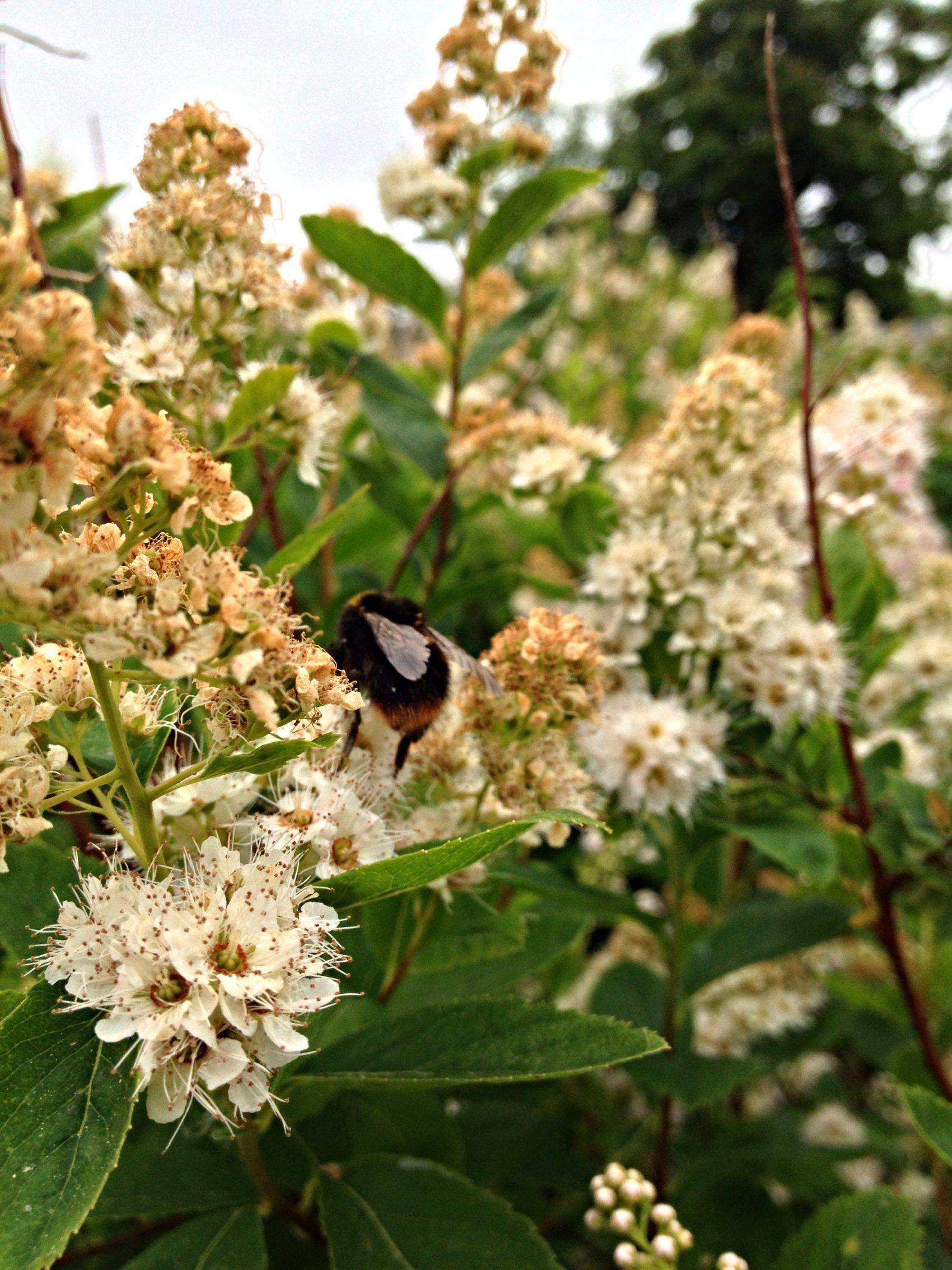 Het is bijig & bloemig in de tuin van fiederels