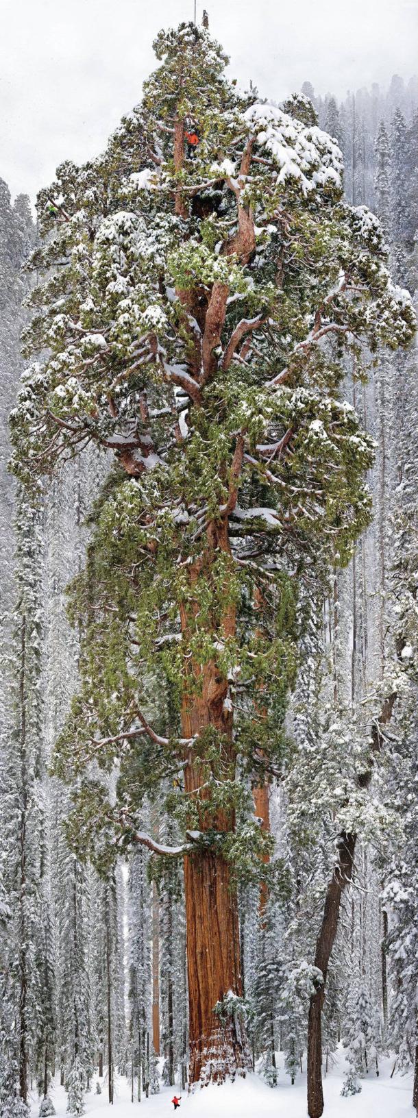the-president-tree